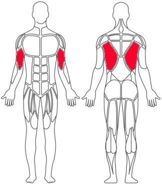 Tractions muscles sollicités