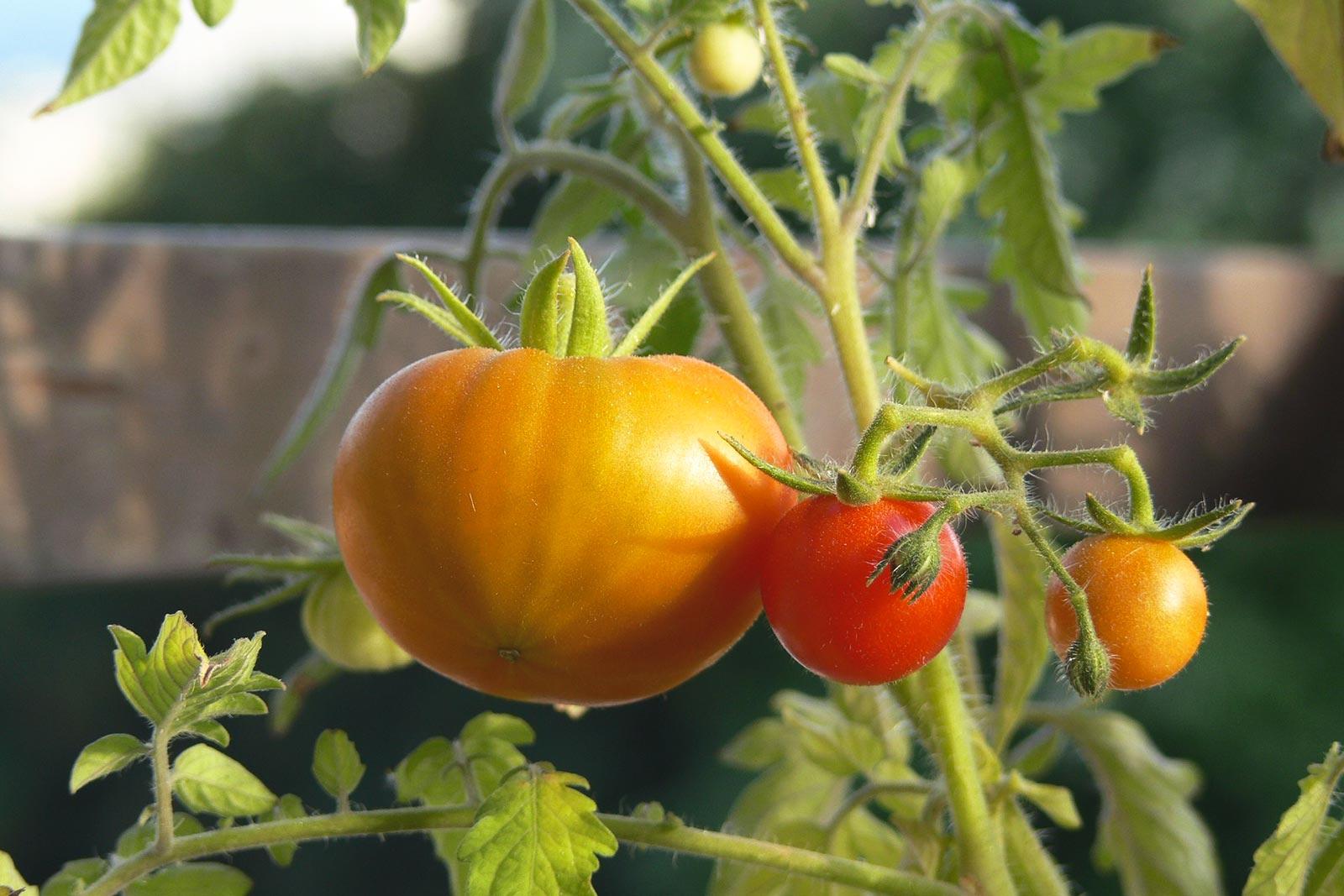 N'ayez pas peur de jardiner
